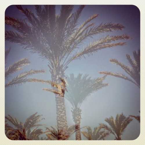 #ilovetrees #Lebanon #palmtrees #ilovenature rendered with #earlybird filter (Taken with Instagram at Raouche)