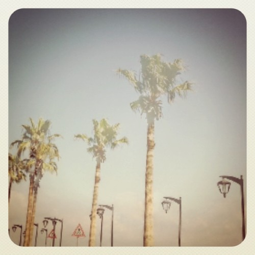 #ilovetrees point blank!! #thisislebanon  (Taken with Instagram at Corniche Manara)