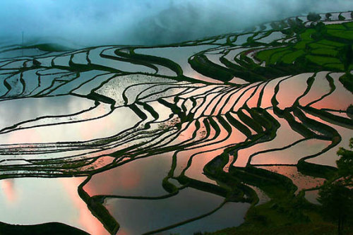 "I've been watching the BBC series ""Wild China"" and these rice terraces are INSANITY. They are built into the sides of the mountains and absolutely cover every square inch. The farmers have been planting rice here for 8,000 years and they plant based on the timing of the bird nesting in their houses. WHOA"