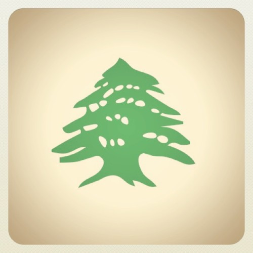 #ilovetrees & my favorite tree is the 'Cedrus libani'…. (Taken with instagram)