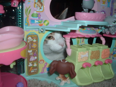 get out of there cat. you cannot terrorize a toy pet shop. that dog is only an inch high and made of plastic. why don't you pick on someone your own size?
