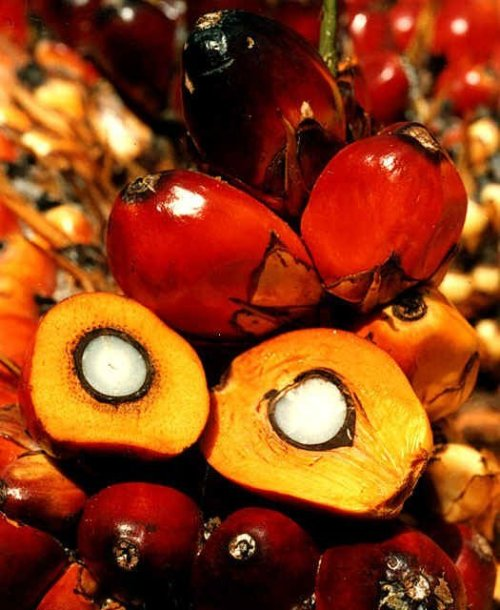 Red Palm Oil, also known as huile rouge in French and dendê in Portuguese, comes from the palm fruit shown in this photo.  The bright orange oil is a staple in many West African dishes and adds unique color and flavor to food.  Recently, this tasty tropical oil has come under criticism for being high in saturated fat.  However, it is also 300 times richer in certain potent anti-oxidants than tomatoes and scientists are now studying its potential role in ameliorating the effects of heart attacks.