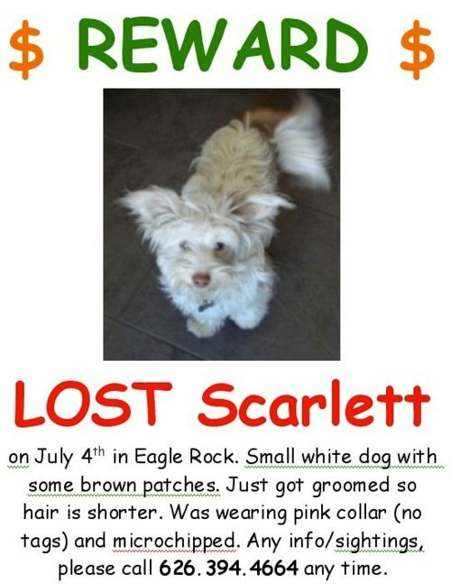 Missing Dog!!! Please help SCARLETT get home by sharing this.  If you are in the Eagle Rock area (Los Angeles,CA), please print it out the flyer and help us post them all over Eagle Rock Blvd./Colorado Blvd. area.  She was lost when she was staying with a sitter near Ridgeview and Eagle Rock Blvd but last seen running up Yosemite towards Colorado Blvd.  Poor little Scarlett is unfamiliar with the area. :(  She is wearing a pink collar with NO tags, but microchipped. Please call 626.394.4664 for any info/sightings. Thank you.