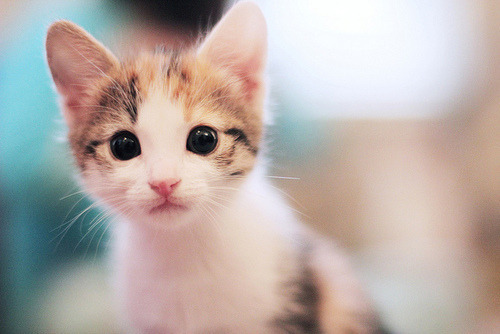 atypicalprincecharming:  We now return you to your regularly scheduled kitten blogging.