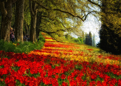 #Photography : Red Flower Meadow in spring