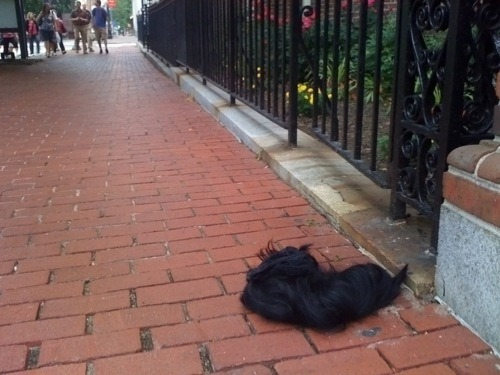 """Tumblewig"" -Submitted by Richard, spotted at 6th & Chestnut."