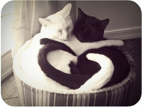 submitted by emilyfacha   Kitties dreaming of love :)