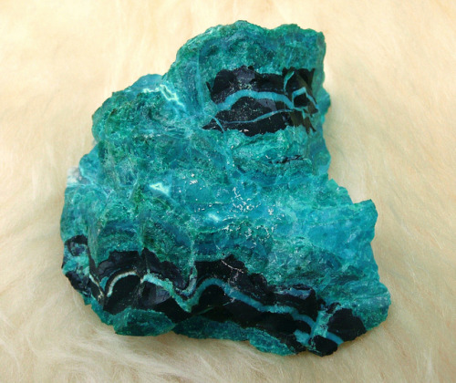 peeza4life:  Chrysocolle_2 by Archangem on Flickr.