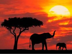 美到令人窒息的非洲