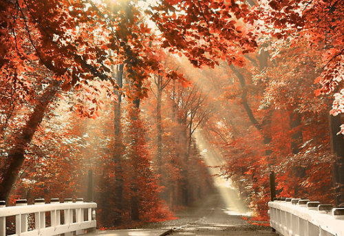 Red For Rest (by LarsvandeGoor)