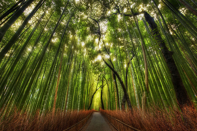 The Bamboo Forest and some great Twitter Lists to follow by Stuck in Customs on Flickr.