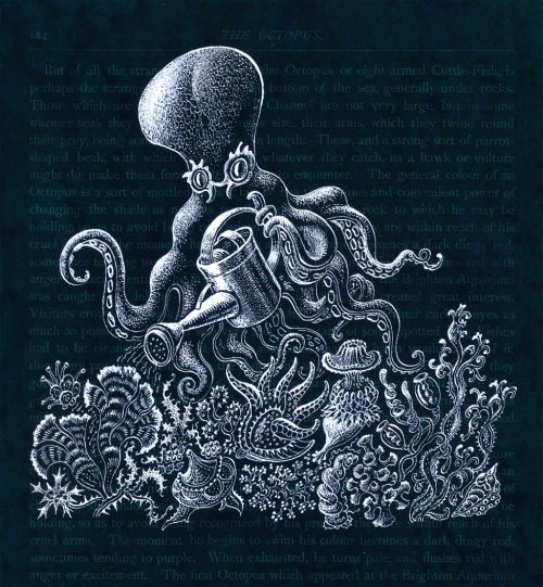 O is for Octopus Leah Palmer Preiss