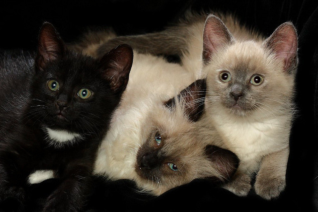 Three Kittens by Picture Zealot on Flickr.