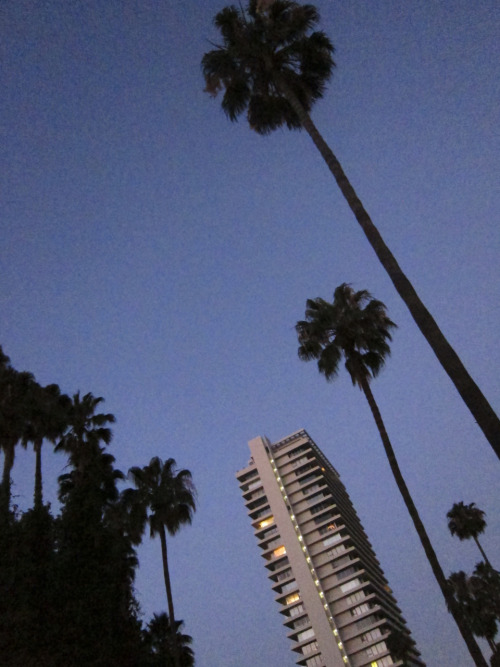I took this photo last night of these palm trees in Beverly Hills. I am crazy about palm trees. Lindsay Lohan used to live in this building.  Photo by Brad Elterman