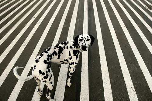 cordisre:  dots or stripes (by ….casper vildrik justesen)