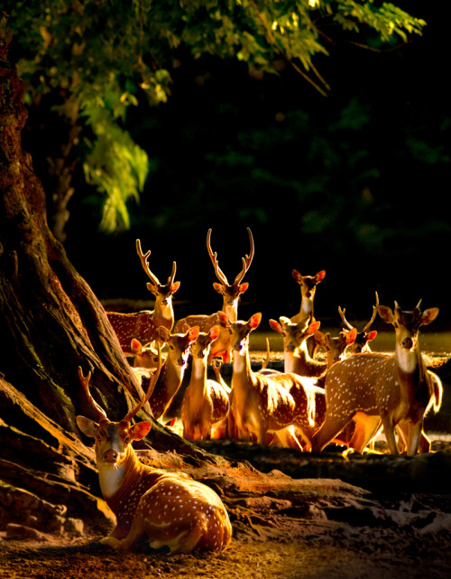 neiture:  Deer | image by Sam Lim  So precious….