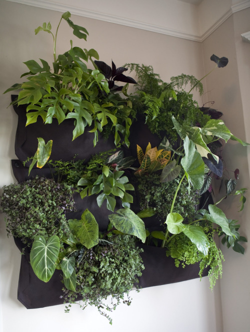 urbangreens:  My Vertical Jungle by fraying  That would be rad too have an indoor wall garden like this… It would have to be on a wall that gets lots of light, so I don't think this is feasible in my current apartment :( Next place, I'm doing this!