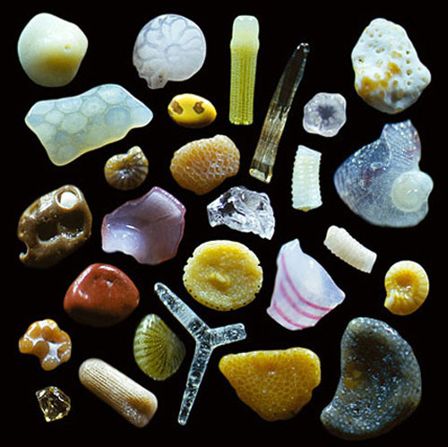 annieatkins:  WHO KNEW?! somethingchanged:  Grains of sand magnified 250 times via mariakonstantinov.