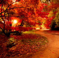 This is the MAGICAL PATH TO AUTUMNAL ECSTASY!! Where all bucolic bounty can be found and every atom in your body will ooze with a fierce sort of bliss until you must sit on the ground overcome with rapture and delight.    That is what would happen to ME, anyway. This was posted on pixdaus by connie