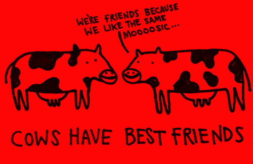 (via Cows have best friends - Learn Something Every Day)