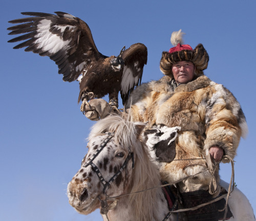 The falconer who flies enough birds for the chase