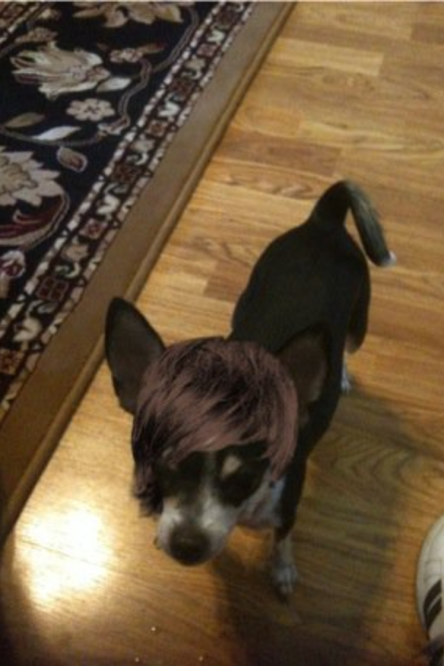My dog IS Justin Beiber.