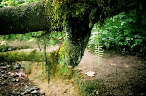 meganmcisaac:  forest park.portland, oregon.july 2011.