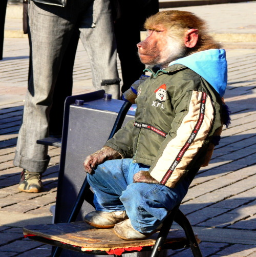 A baboon dressed in children's clothes sits on a chair by Moscow's Red Square. Enterprising Russians use them and various other exotic animals such as eagles to draw a crowd and charge a pretty Ruble for a photo opportunity.