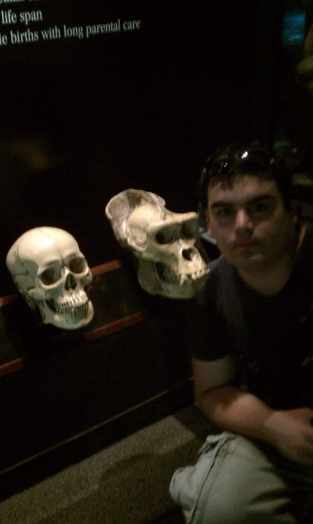At The Zoo.  Three forms of primate skulls (left to right):  Humanoid Ape-oid Nephew-oid