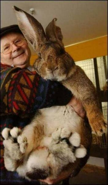 This giant rabbit, this GIANT RABBIT!!!