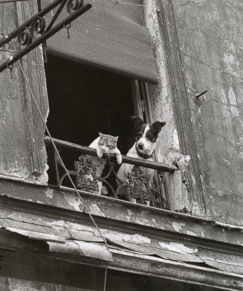 liquidnight:  Annick Gérardin From Paris entre chats