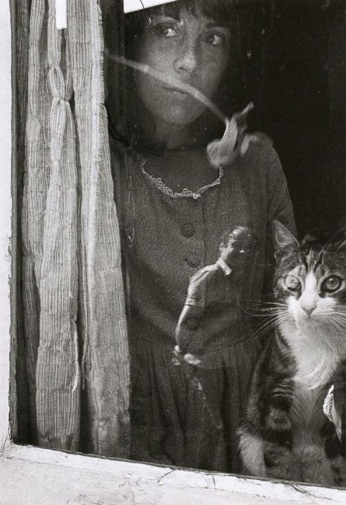liquidnight:  Eve Morcrette From Paris entre chats