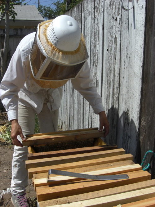 Checking out hives last weekend with my bee mentor, Jessie, of Brown's Downtown Bees.