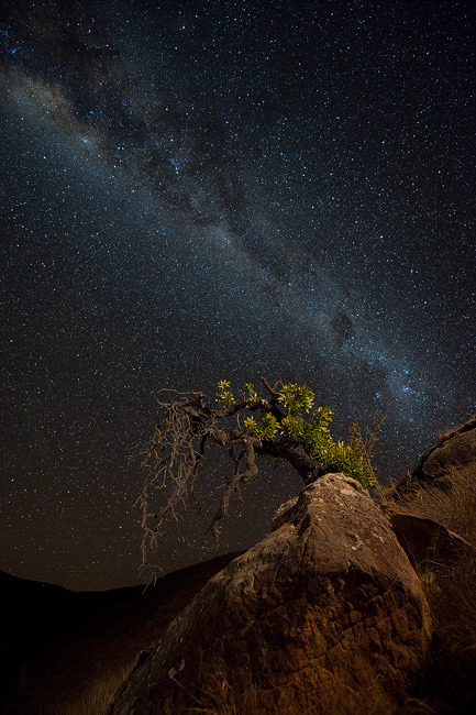 lori-rocks:  Milky Way  by Mark Dumbleton
