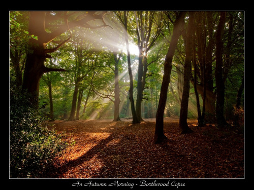 """An Autumn Morning - Borthwood Copse"" (Jamie Russell). I can't believe this is real!"