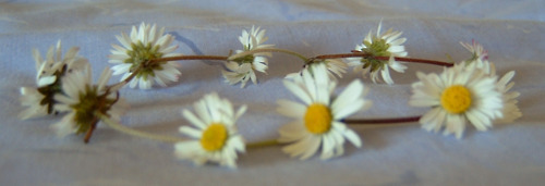 can we sit in a field and make daisy chains and press flowers?