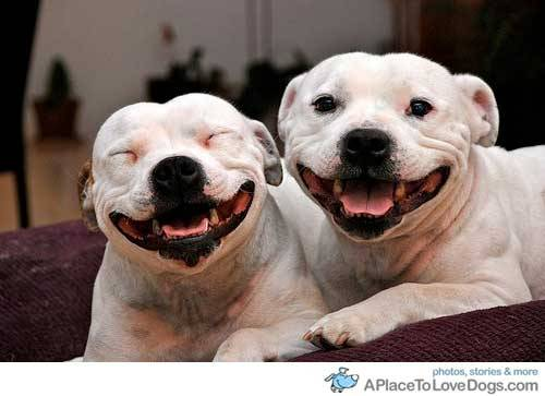 pinterest These two dogs are really happy! Original Article