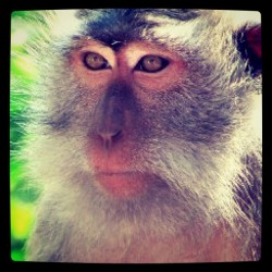 #monkey  in monkey #forrest @ #bali #iphonesia #asia (Taken with instagram)