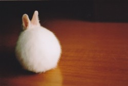 Bunny pictures seem to keep finding their way to me, and they happen to be the cutest ones. Why oh why?