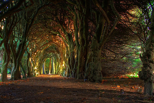 Fairytale tree tunnel. (by jacco55)