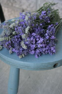 The classic garden smell of fresh lavender. Summer! this image via erintime