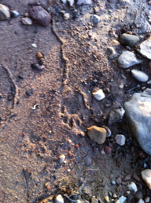 Footprint in the wild