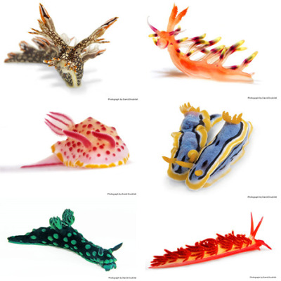 Nudibranchs are colourful sea slugs, and are found all over the world.  They are most prolific in warm, shallow sea water.