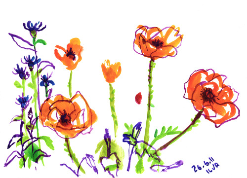 Sketch of poppies of summer cottage garden.