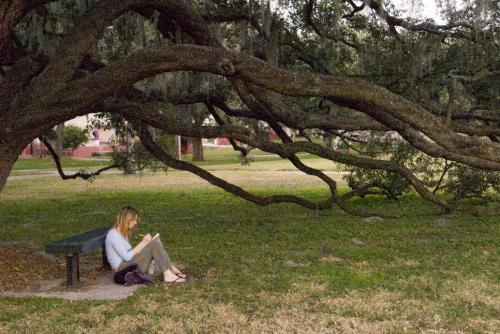 In honor of the final Harry Potter movie, it's the USF Whomping Willow!