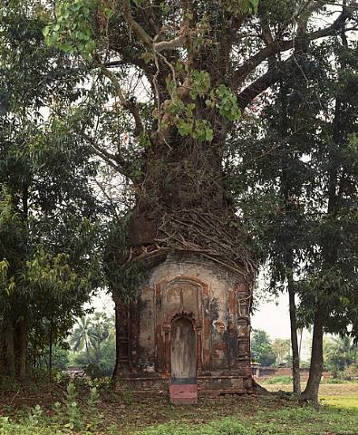 judywald:    Laura McPhee, Banyan Tree and 16th Century Terracotta Temple, Attpur, West Bengal, India, 1988