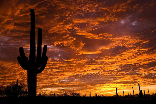 A desert sunset in Tucson, Arizona (by Saguaro Pictures)