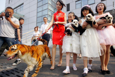 (via China's latest craze: dyeing pets to look like other wild animals – Global Public Square - CNN.com Blogs)