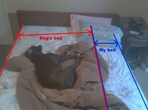 This is true even with my two 10lb dogs. They each take up half of my bed and I can't figure out how they do it!