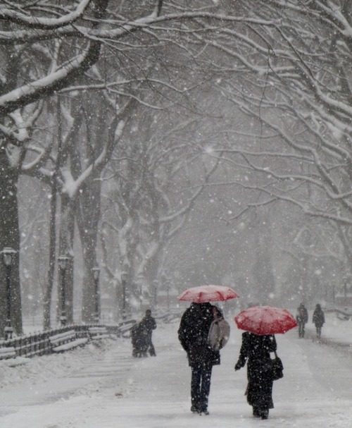 Winter in New York City's Central Park